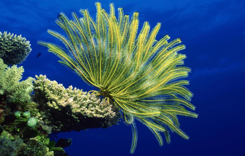 Photo wallpaper underwater, sea, ocean, life, marine, reef, coral, anemones, marine life