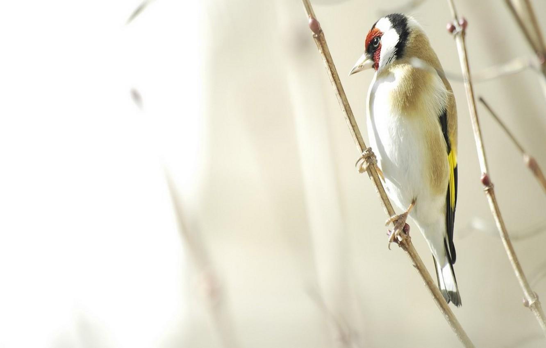 Photo wallpaper branch, Bird