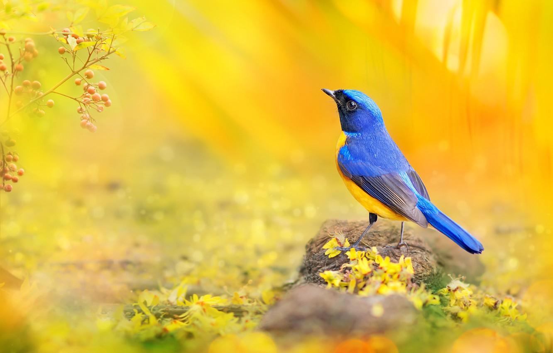 Photo wallpaper macro, blue, yellow, berries, bird, branch, petals, photographer, Taiwan, bokeh, sunlight, colorful, bright, FuYi Chen, …