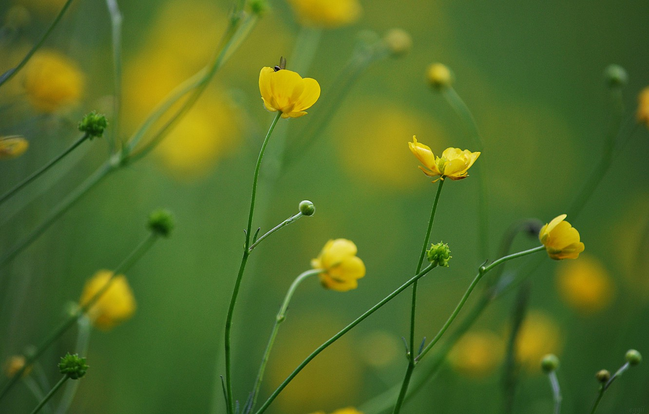 Photo wallpaper flowers, background, yellow, blur