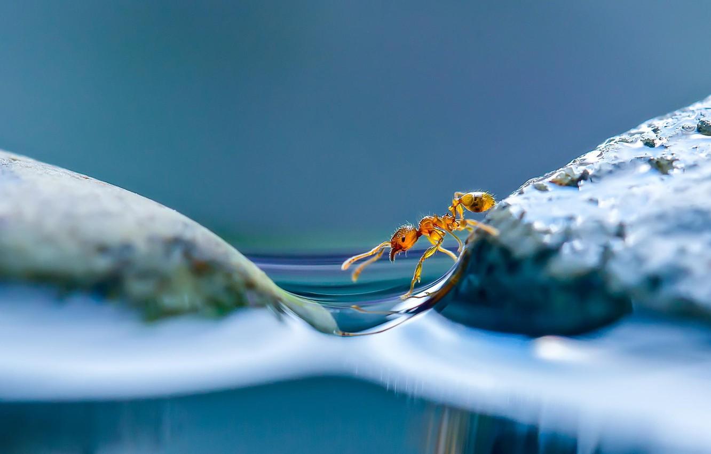 Photo wallpaper water, macro, ant, Islands