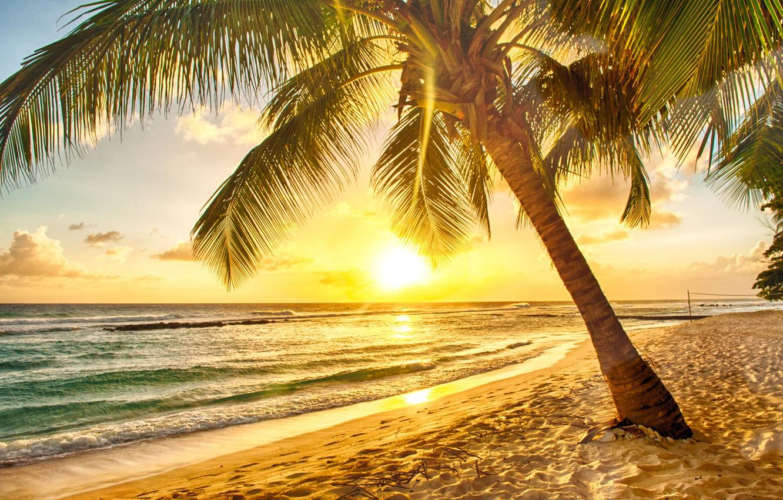 Photo wallpaper sand, sea, beach, sunset, tropics, palm trees, shore, beach, sea, sunset, paradise, palms, tropical