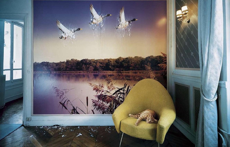 Photo wallpaper Wallpaper, duck, Koshak, Wall, scratches