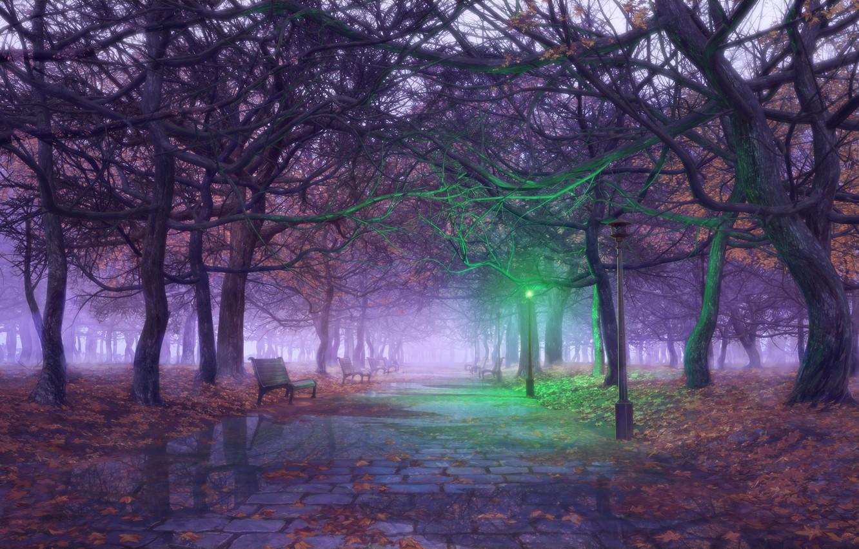 Photo wallpaper trees, Autumn, lantern, puddles, alley