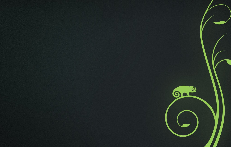 Photo wallpaper green, chameleon, background