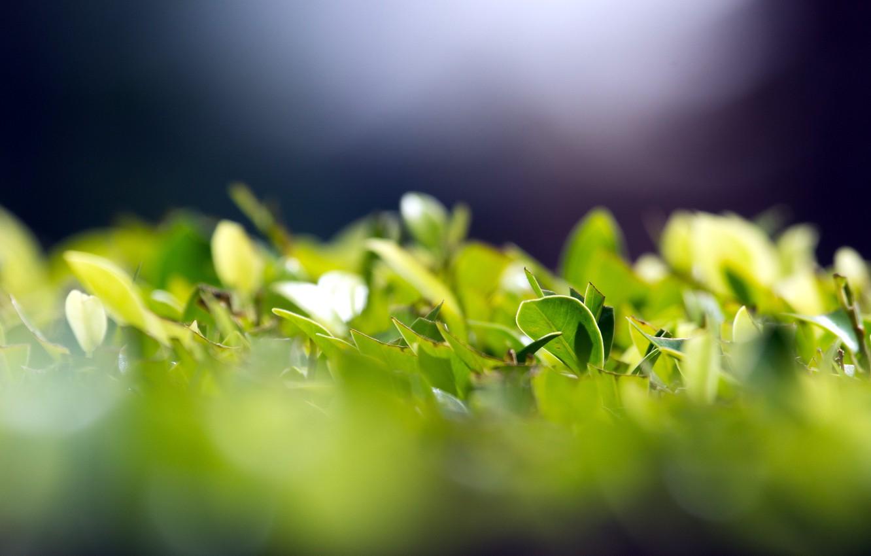 Photo wallpaper greens, leaves, macro