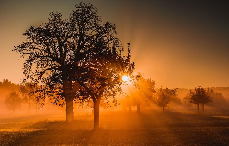 Photo wallpaper field, nature, fog, tree, morning