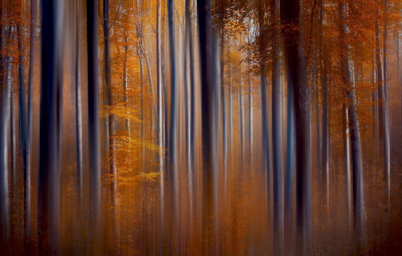 Photo wallpaper autumn, trees, nature