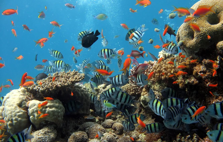 Photo wallpaper sea, fish, fish, the ocean, fishing, aquarium, corals, diving