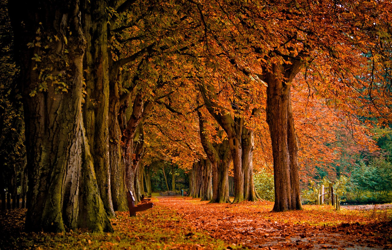 Photo wallpaper autumn, forest, leaves, trees, landscape, nature, Park, shop, falling leaves, bench