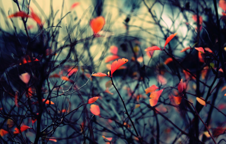 Photo wallpaper autumn, branches, nature, foliage