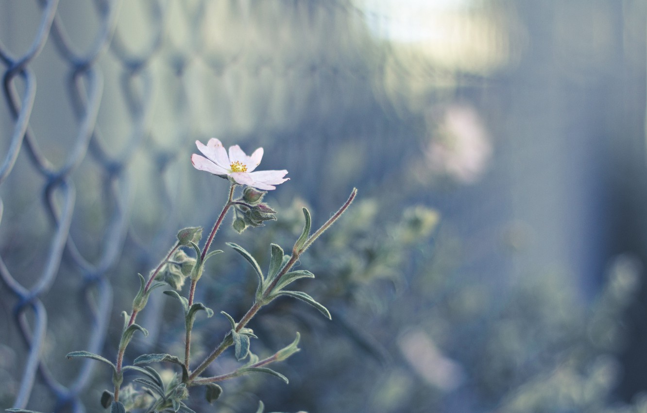 Photo wallpaper flower, pink, the fence, blur, buds