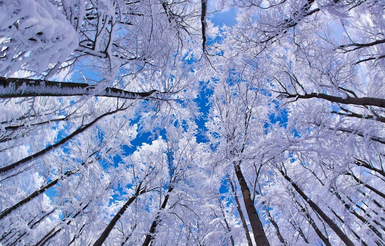 Photo wallpaper winter, the sky, snow, trees