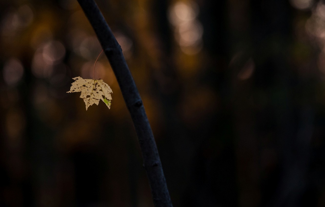 Wallpaper macro, background, tree, widescreen, Wallpaper, blur