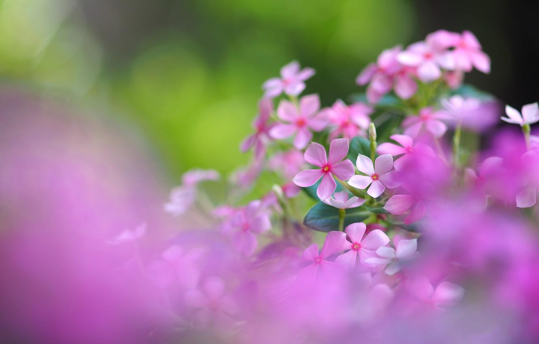 Photo wallpaper field, nature, petals, meadow, inflorescence