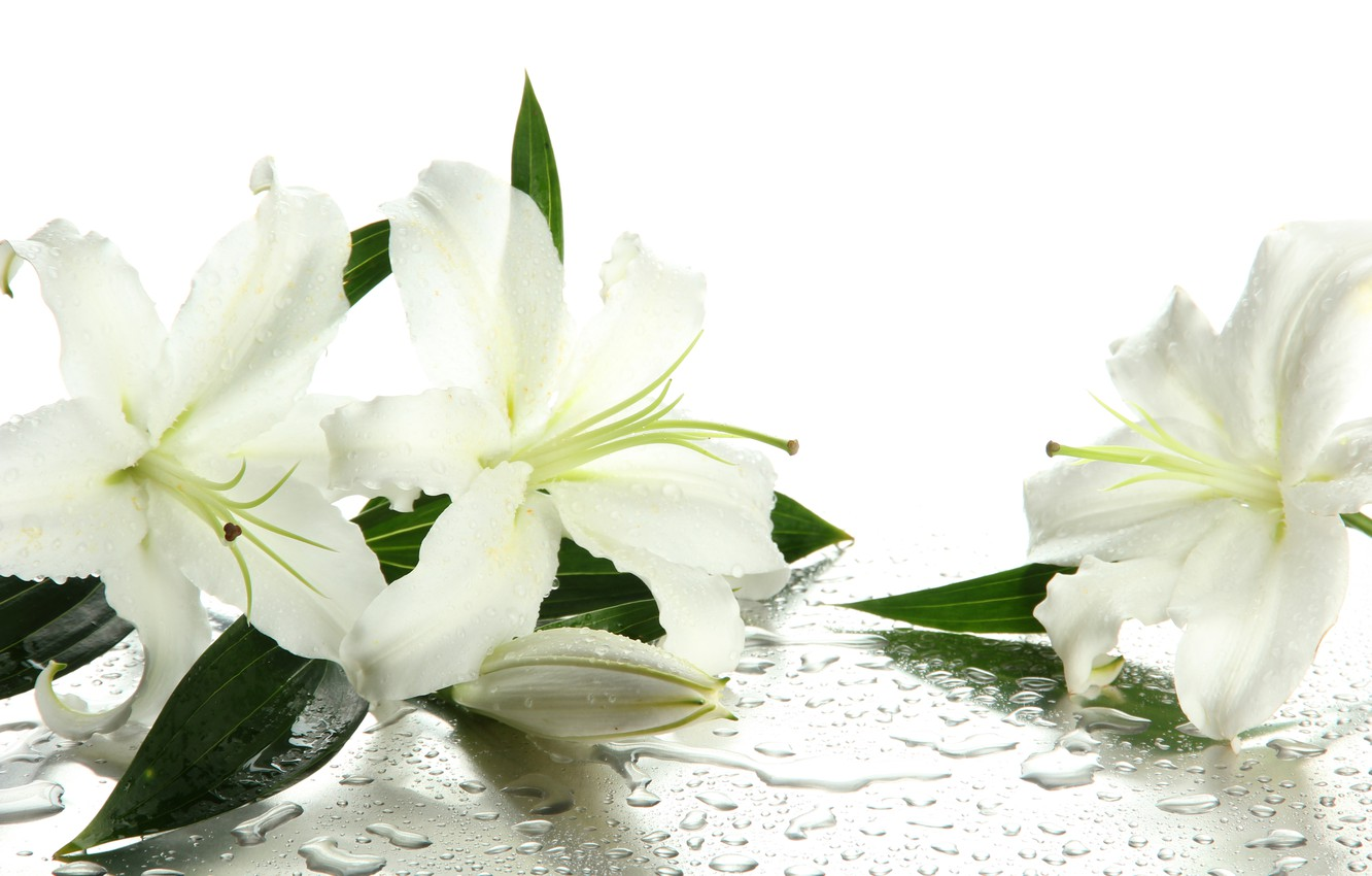 Photo wallpaper water, flowers, droplets, buds, leaves, white lilies