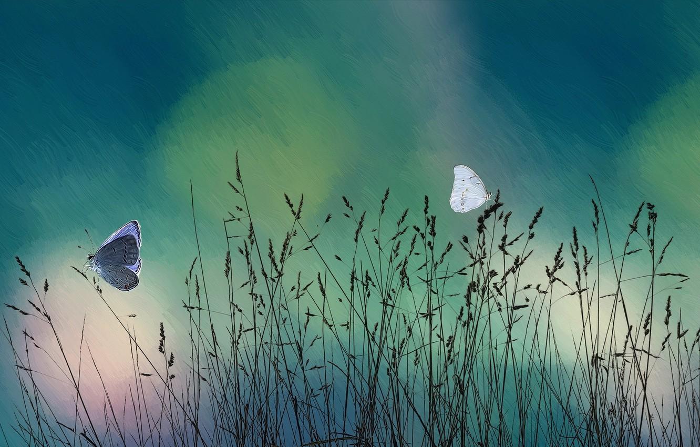 Photo wallpaper grass, butterfly, nature