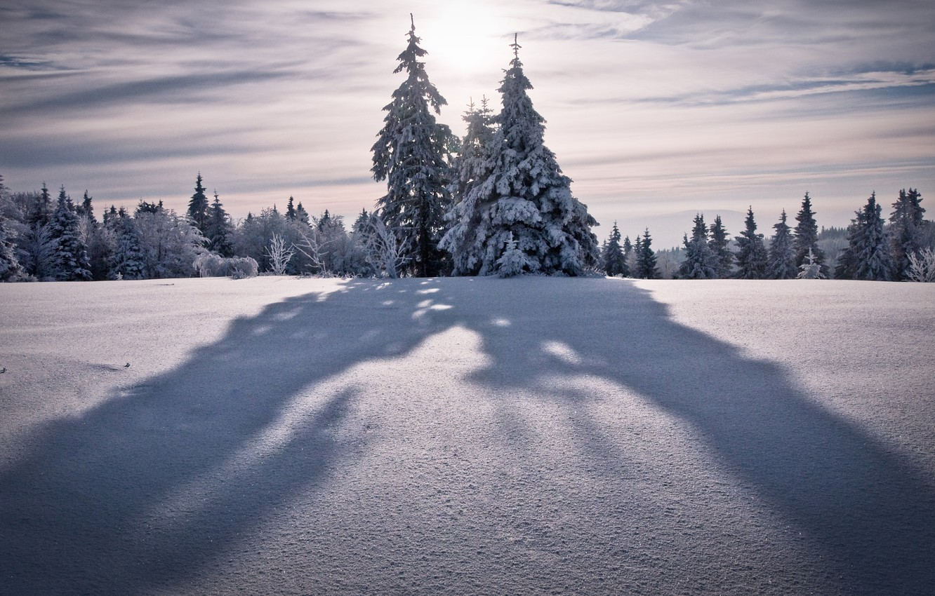 Photo wallpaper winter, the sky, the sun, snow, trees, mountains, nature, tree, the wind, tops, tree, tree, ...