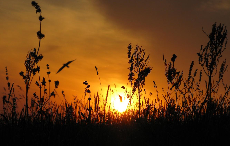 Photo wallpaper the sun, sunset, the steppe, bird, Ukraine