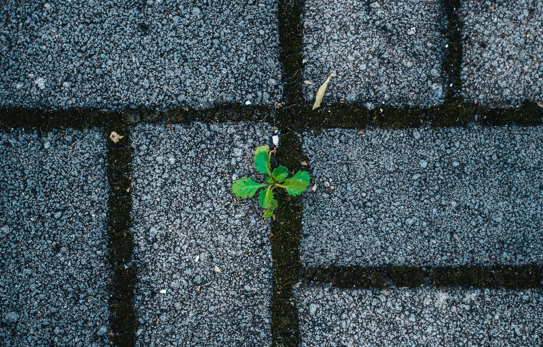 Photo wallpaper grass, Rostock, minimalism, pavers, grass, the sidewalk, minimalism, stone