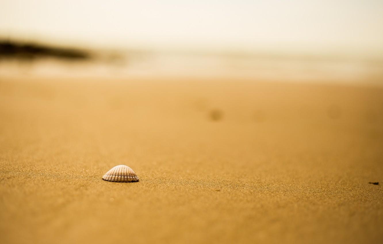 Photo wallpaper sand, beach, shell, bokeh