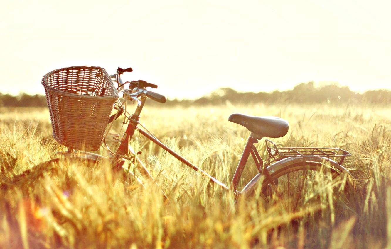 Photo wallpaper wheat, field, the sun, nature, bike, background, Wallpaper, basket, mood, rye, wallpaper, ears, bicycle, Sunny …