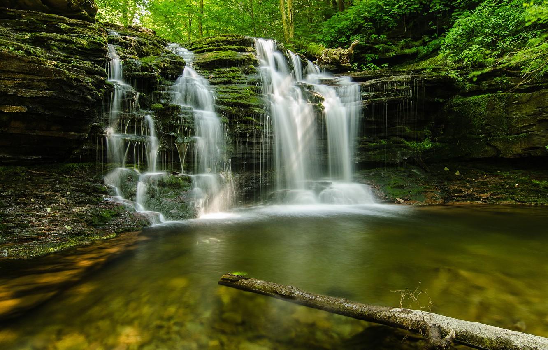 Photo wallpaper forest, summer, nature, stream, stones
