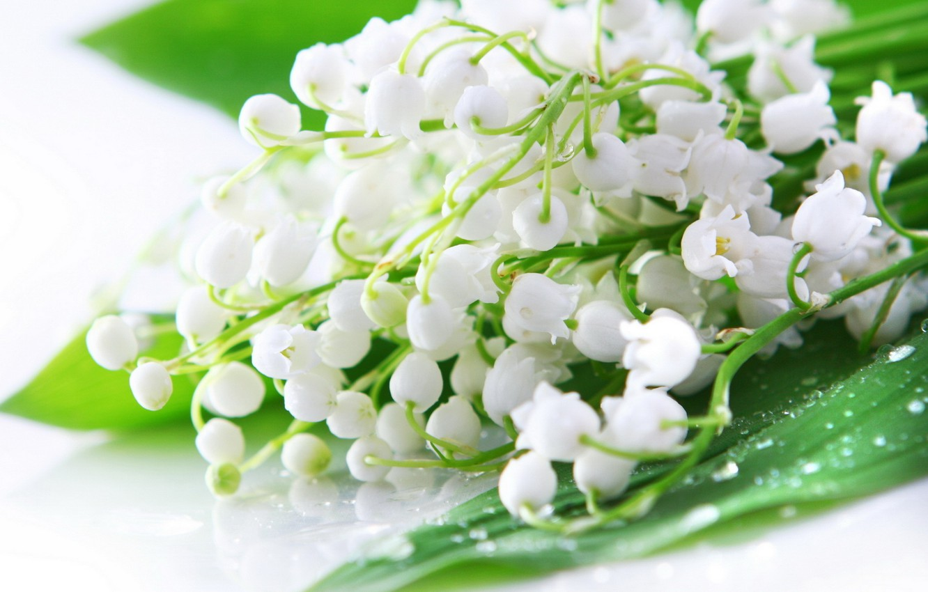 Wallpaper Drops Flowers Rosa Bouquet Spring White Lilies Of