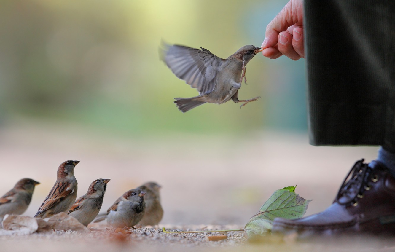 Photo wallpaper sheet, food, hand, shoes, waiting, pants, sparrows