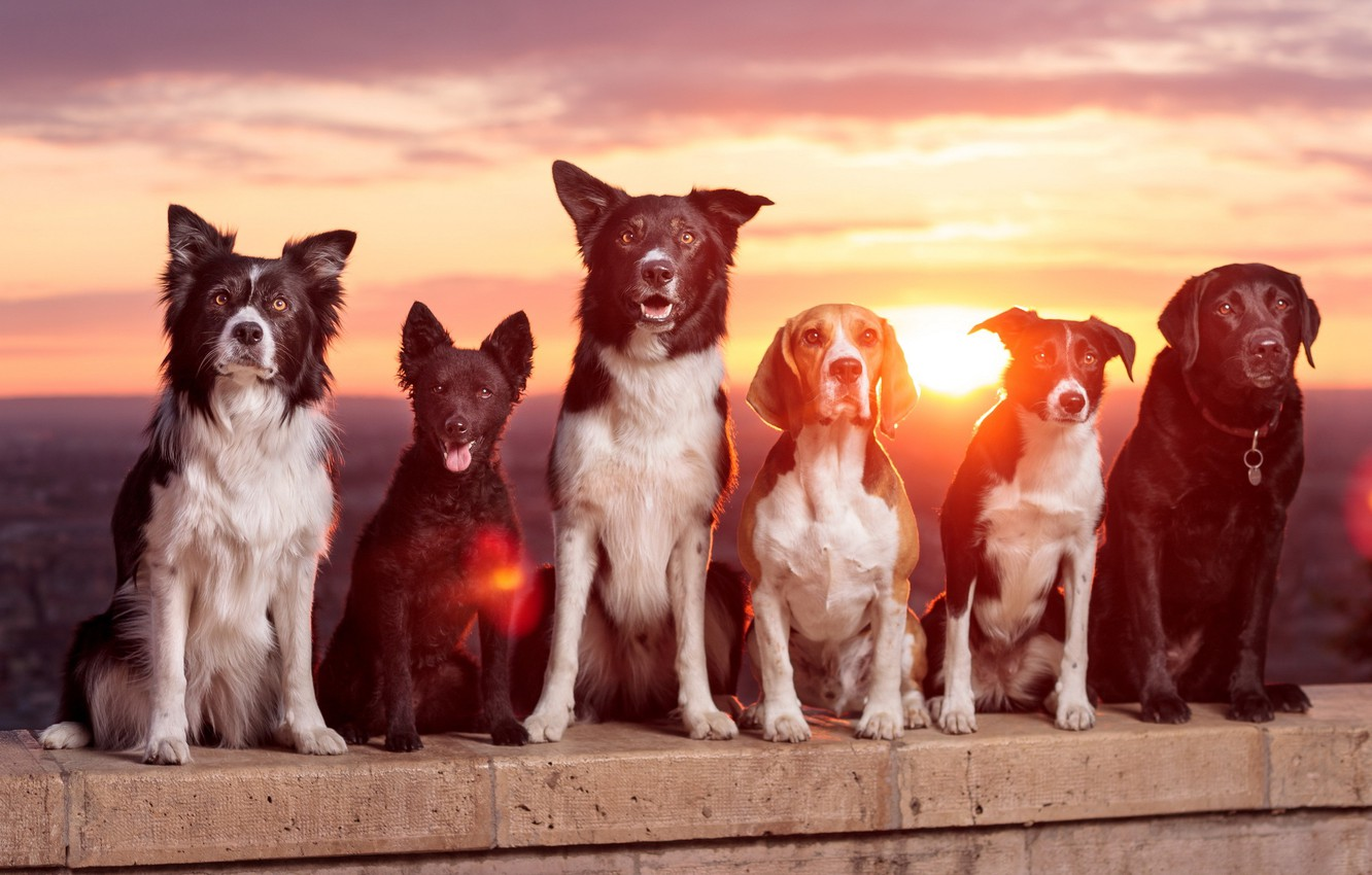 Photo wallpaper dogs, sunset, friends