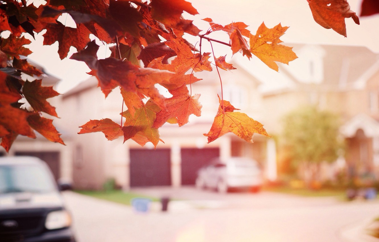 Photo wallpaper autumn, leaves, tree, street, maple