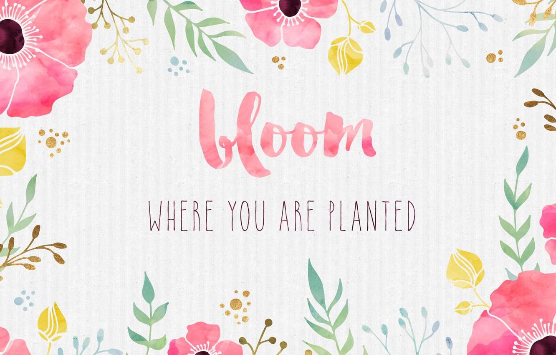 Wallpaper flowers, background, paint, Maki, watercolor, the phrase, quote,  inspiration, motivation, color, bloom images for desktop, section разное -  download