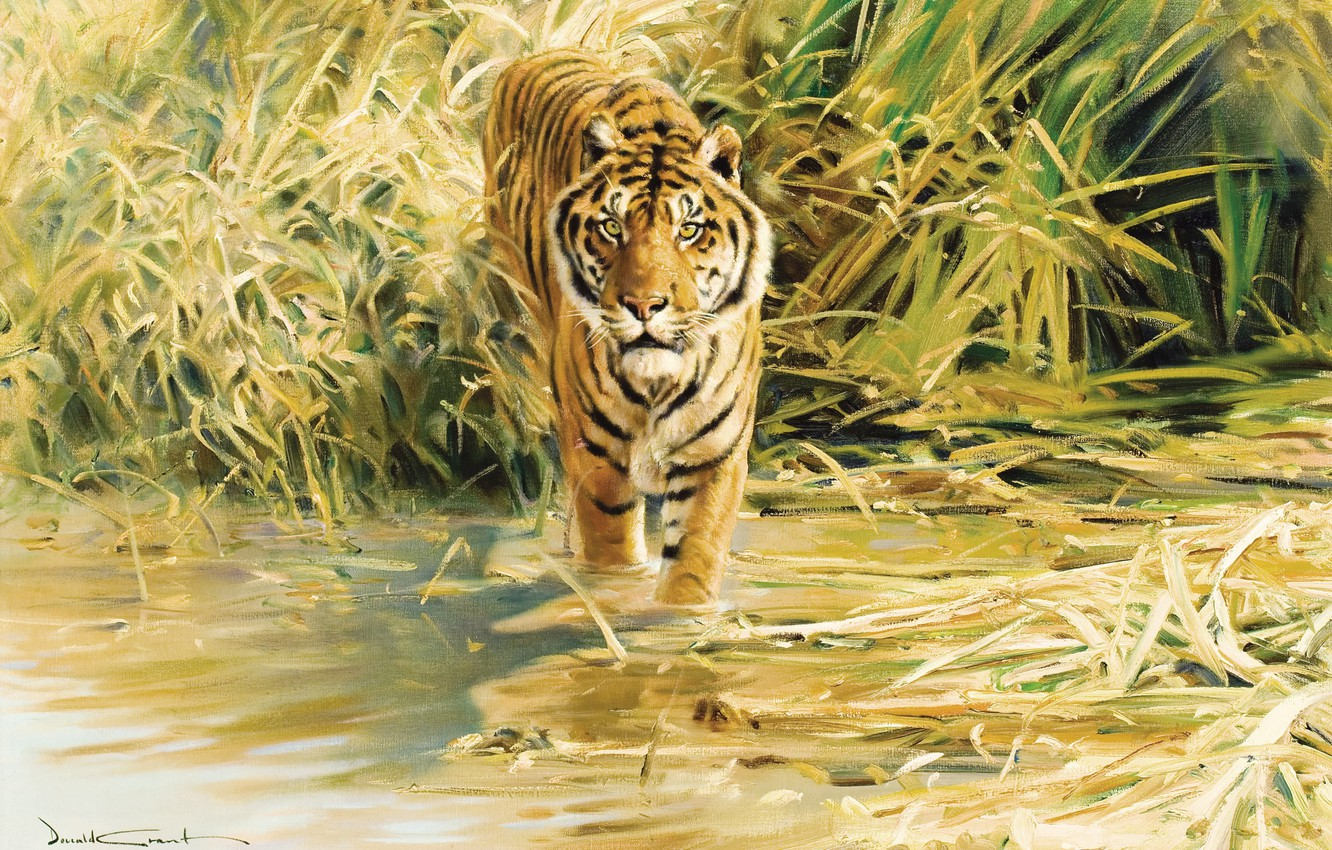 Photo wallpaper tiger, figure, painting, Tiger, Donald Grant
