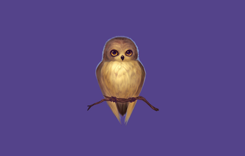 Photo wallpaper purple, owl, bird, branch, owl