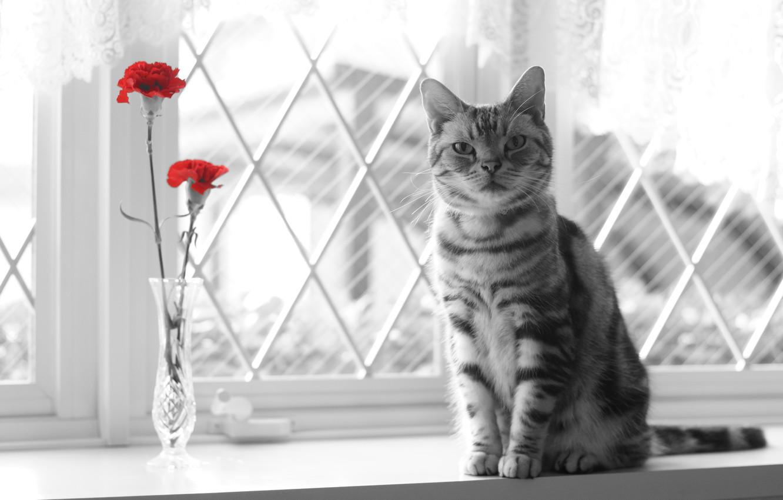 Photo wallpaper cat, look, flowers, window