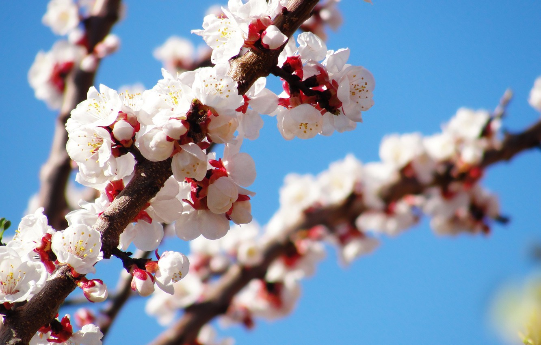 Photo wallpaper Tree, spring, flowering