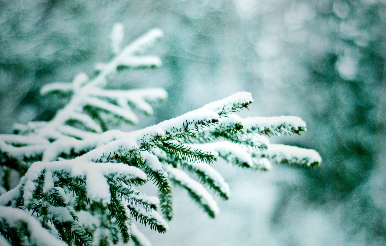 Photo wallpaper winter, snow, branches, nature, tree, bokeh