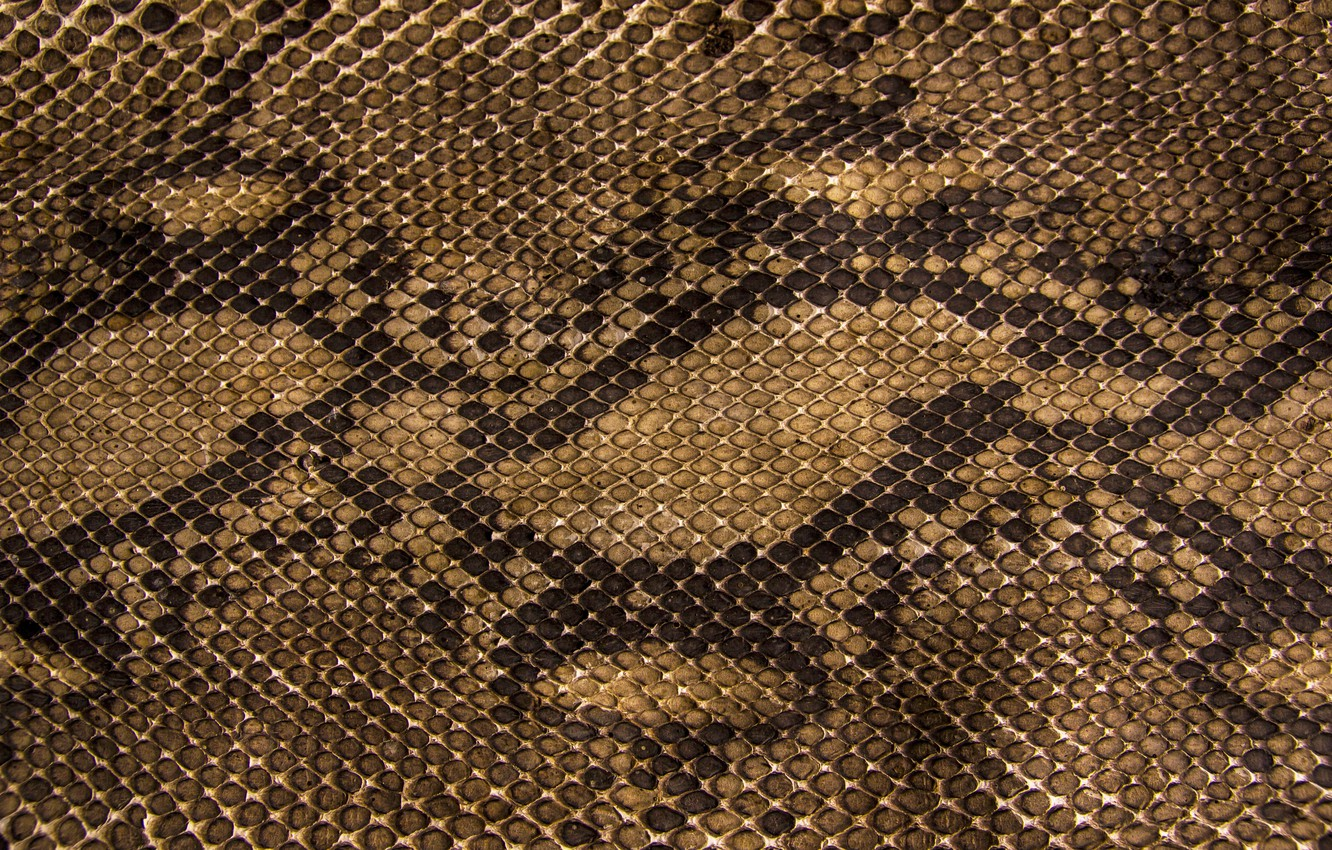 Photo wallpaper snakes, texture, scales, leather