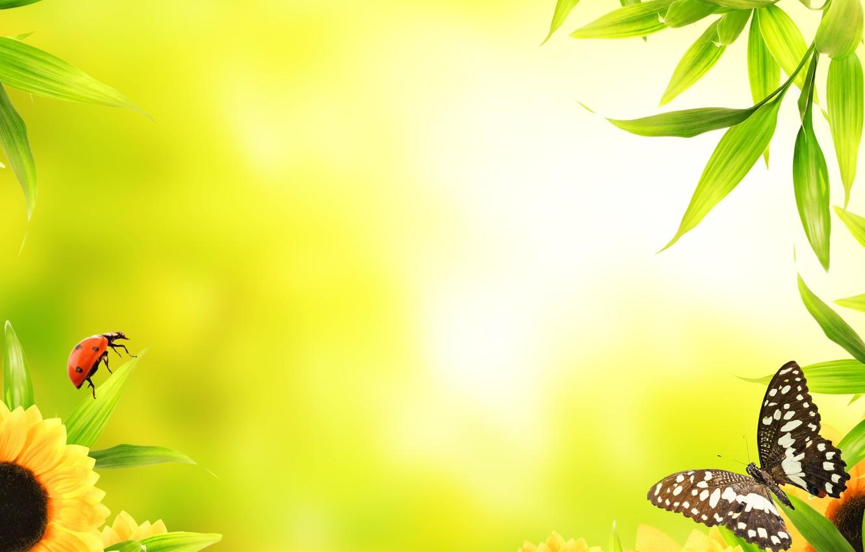 Photo wallpaper macro, flowers, butterfly, ladybug, leaves