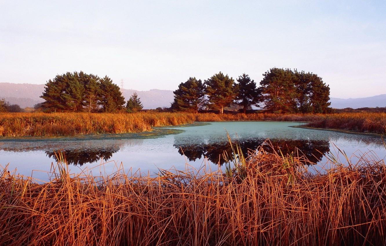 Photo wallpaper trees, orange, lake, the reeds