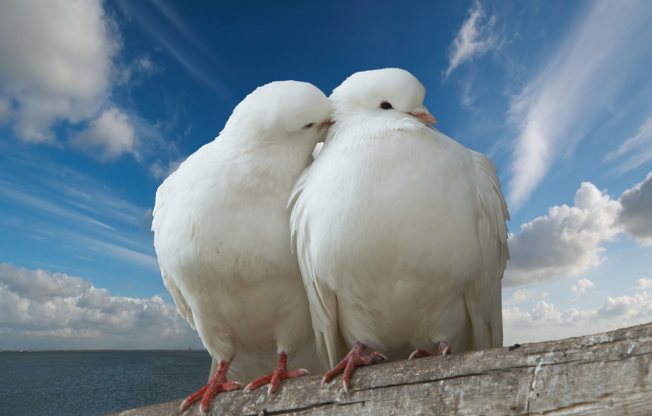 Photo wallpaper sea, the sky, clouds, love, passion, the world, dove, kiss, love, peace, Valentine's day, sky, …