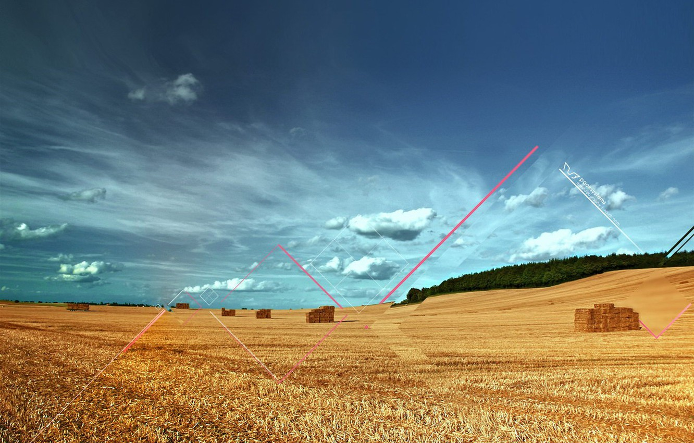 Photo wallpaper line, Field, harvest