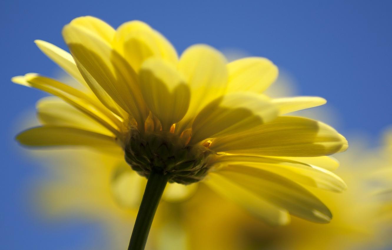 Photo wallpaper flower, yellow, nature