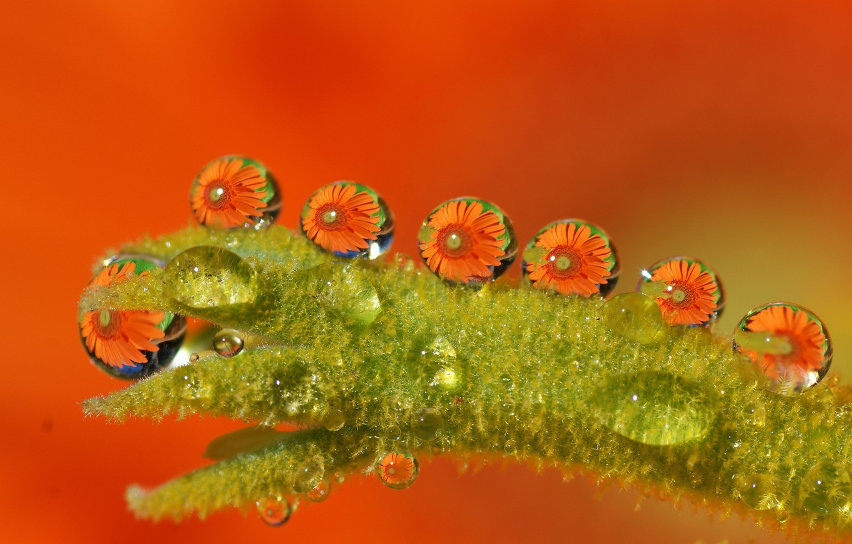 Photo wallpaper wet, water, drops, macro, flowers, orange, green, Tamara's Photography