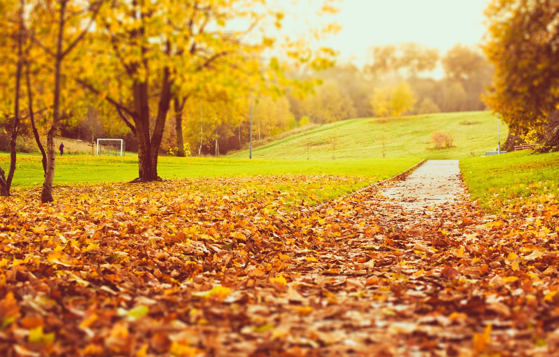 Wallpaper Road Autumn Grass Leaves Trees Nature Park Lawn Yellow Blur Orange Images For Desktop Section Priroda Download