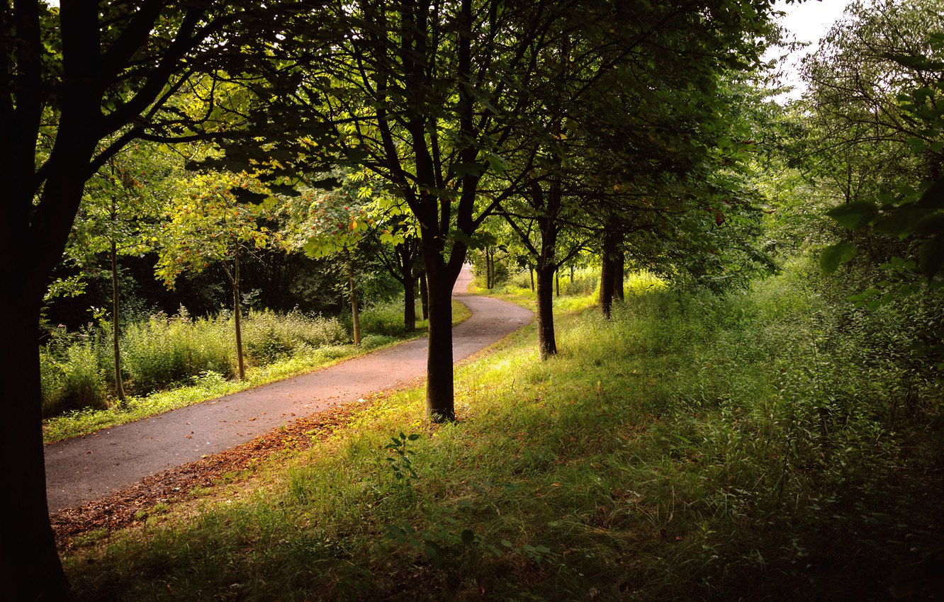 Photo wallpaper road, forest, summer, grass, trees, Park, stay, mountain, shadow, Germany, day, wallpaper, grass, Landscape, forest, …