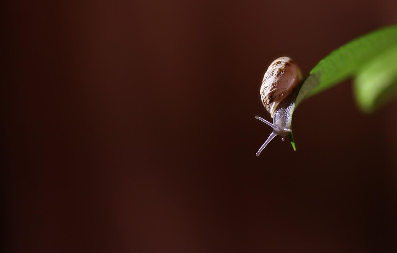 Photo wallpaper sheet, snail, photo, photographer, Alessandro Di Cicco