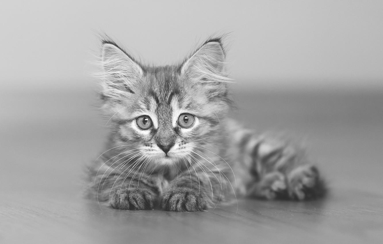 Photo wallpaper look, baby, black and white, kitty, monochrome, bokeh