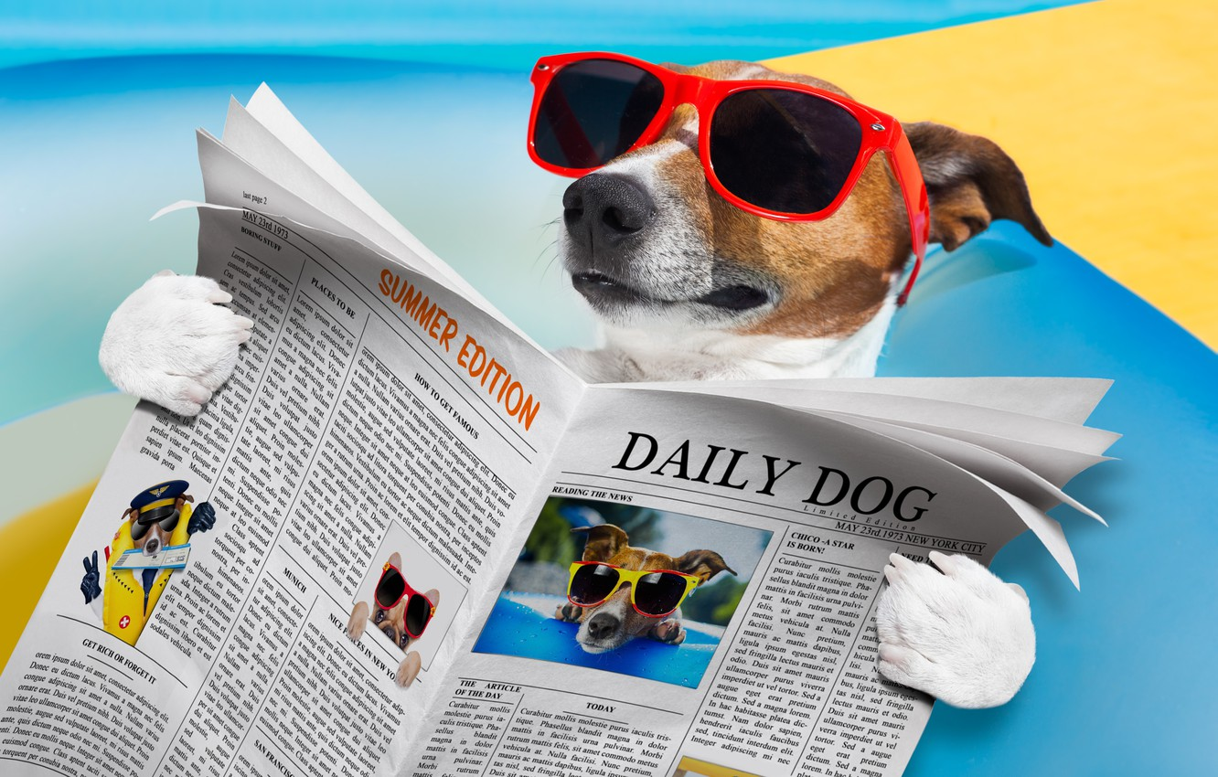 Photo wallpaper humor, glasses, newspaper, lies, reads, Jack Russell Terrier