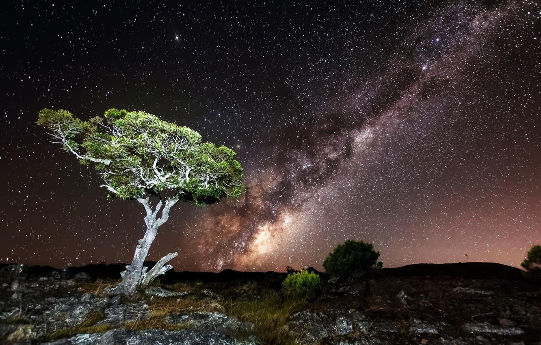 Photo wallpaper the sky, stars, light, night, tree, rocks